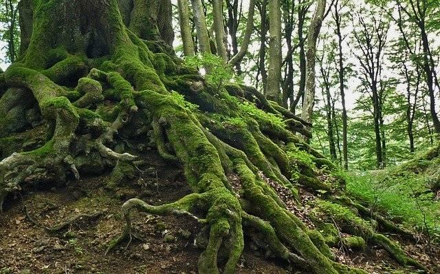 Root Tree - Free photo on Pixabay (777279)