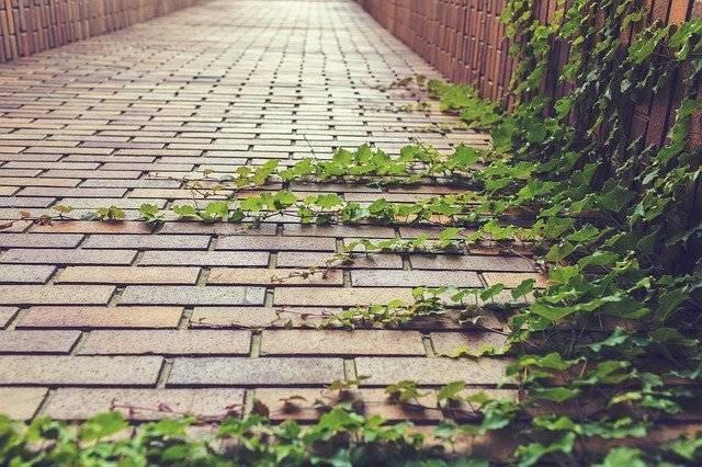 Ivy Climbing Plant Creeper - Free photo on Pixabay (777291)