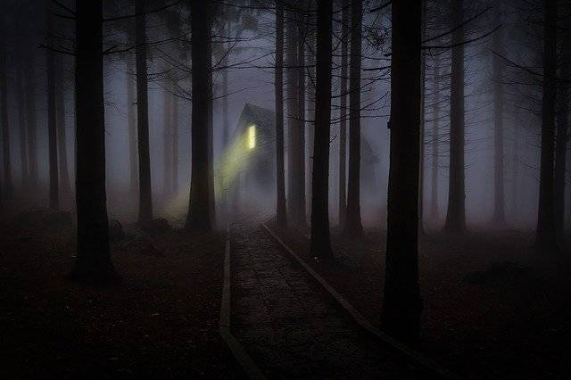 Foggy Mist Forest - Free photo on Pixabay (777547)