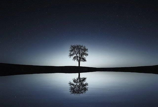 Tree Lake Reflection - Free photo on Pixabay (778062)