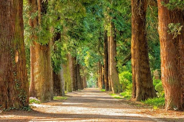 Avenue Trees Away - Free photo on Pixabay (779555)