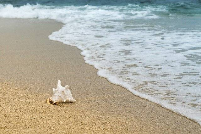 Shellfish Mussel Sand - Free photo on Pixabay (779637)