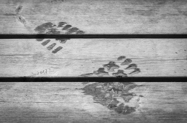 Footprint Wet Step - Free photo on Pixabay (780901)