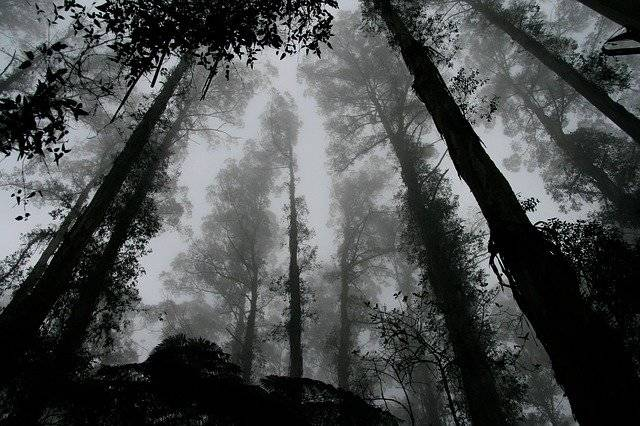 Forest Foggy Misty - Free photo on Pixabay (781089)