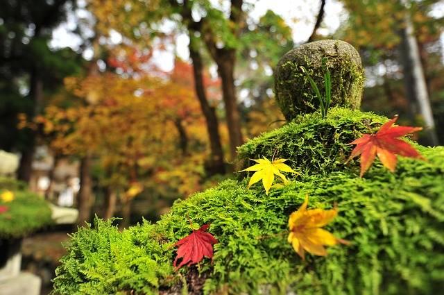 Autumnal Leaves Maple - Free photo on Pixabay (781297)