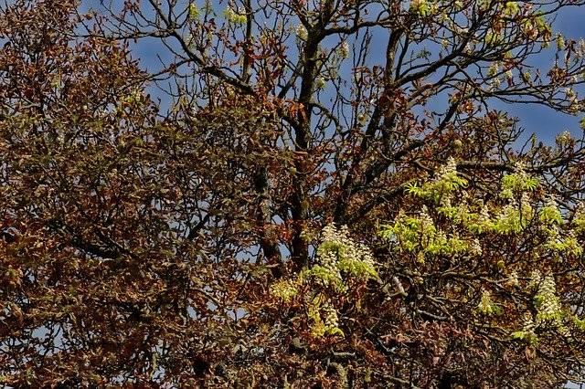 Nature Tree Horse Chestnut - Free photo on Pixabay (781600)